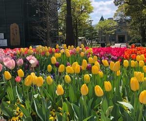 tulips and u.u image