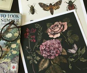 bug, flowers, and moth image