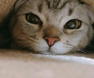 قطه, قطط, and بزونه image