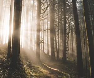 aesthetic and forest image