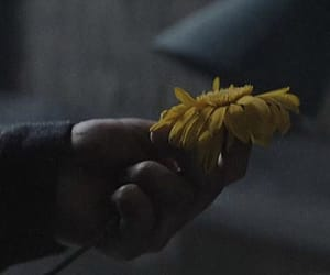 flower, hand, and music video image
