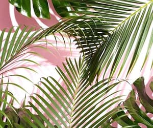 pink, wallpaper, and plants image