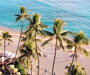 palm trees, beach, and ocean image