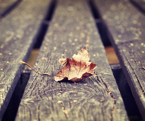 photography, autumn, and leaf image