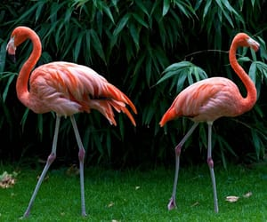 animal, birds, and pink image