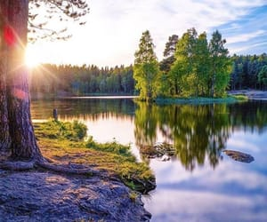 forest, summer, and lake image