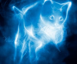 animal, cat, and expecto patronum image