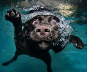 dog, water, and funny image