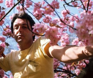 aesthetic, cherry blossoms, and Paul McCartney image