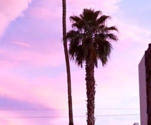 colours, palm trees, and pink image