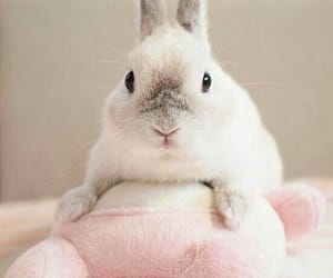 adorable, rabbit, and cute image