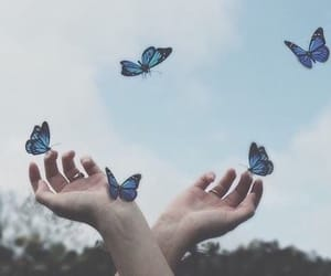 butterfly, blue, and sky image
