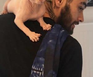 zayn malik, zayn, and cat image