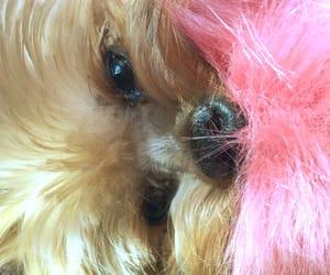 animals, bright, and dog image