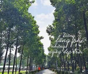 tree and natural image