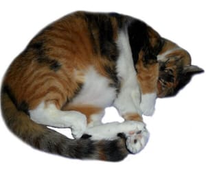 cat and png image