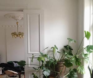 plants and interior image