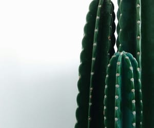 cactus, wallpaper, and green image