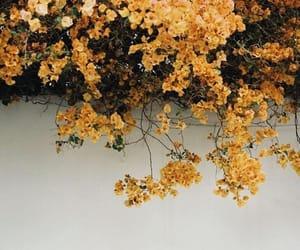 flowers, grunge, and naturw image