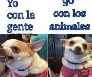 dogs, perros, and frases image