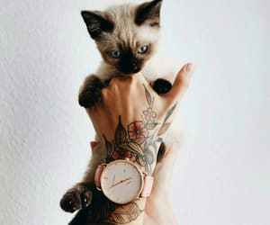 cat, tattoo, and watch image