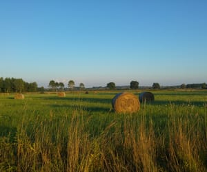 field, Poland, and summer image