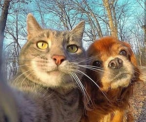 cat, friends, and dog image