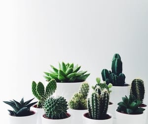 cactus, green, and white image