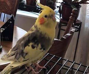 animal, tame, and bird image