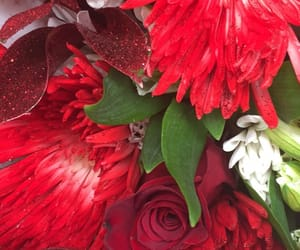 aesthetic, red, and redflowers image