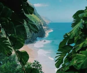 tropical and wallpaper image