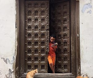 boy, doors, and cats image