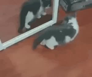 animal, kitten gif, and cat image