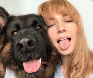 bang, dog, and ginger image