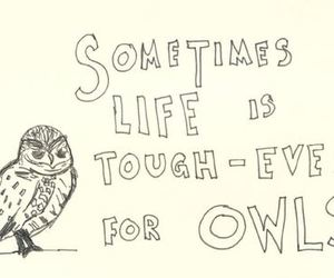 owl, cute, and text image