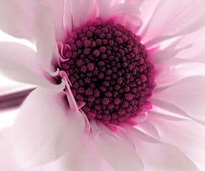abstract, flowers, and inspiration image