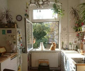 aesthetic, cats, and kitchen image