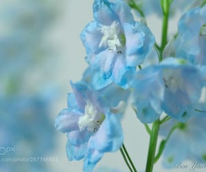 blooming, bokeh, and floral image
