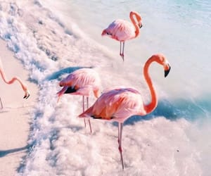 animal, beach, and flamingo image