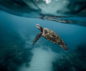 animal, sea, and turtle image