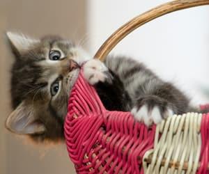 cat, ﺭﻣﺰﻳﺎﺕ, and بغدادً image