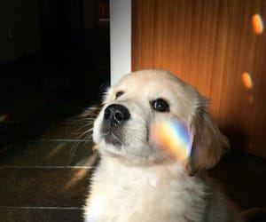 dogs, rainbow, and dog lover image