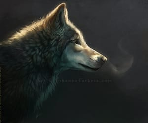 grey and wolf image