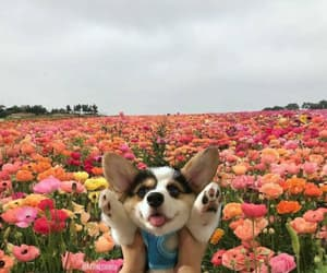 dog, flowers, and cute image