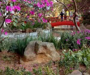 日本, ブラジル, and 庭園 image