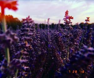 photography, purple, and huji image
