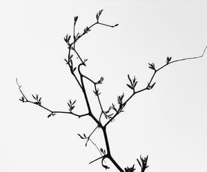 beijing, black and white, and china image