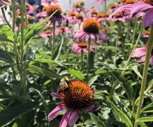 bees, floral, and flower image