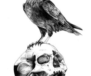 aesthetic, edgar allan poe, and skull image
