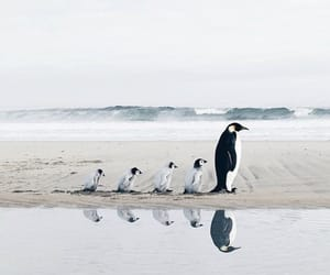animal, penguin, and family image